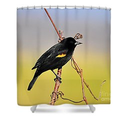 Radiant Red-winged Shower Curtain by Al Powell Photography USA