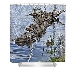 Raft Of Ducks Shower Curtain by Cathy Anderson