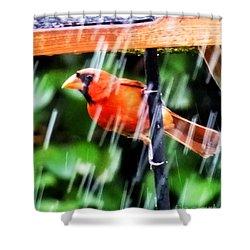 Shower Curtain featuring the photograph Rain Bird by Lizi Beard-Ward