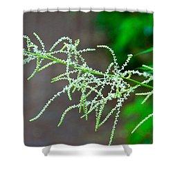 Rain Forest Magic Shower Curtain by Dana Kern