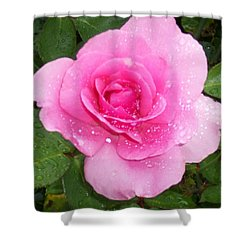 Rain Kissed Rose Shower Curtain by Catherine Gagne