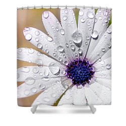 Rain Soaked Daisy Shower Curtain