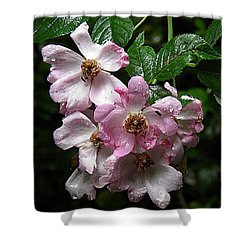 Rain Soaked Rose Shower Curtain