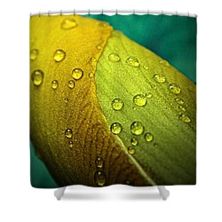 Rain Wrapped Shower Curtain