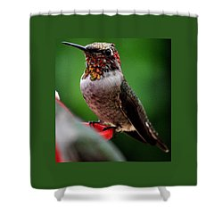 Shower Curtain featuring the photograph Rainbow Colored Male Anna by Jay Milo