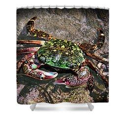 Rainbow Crab Shower Curtain by Mariola Bitner