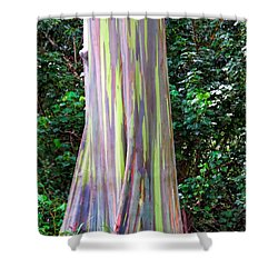 Rainbow Eucalyptus 3 Shower Curtain