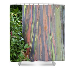 Shower Curtain featuring the photograph Rainbow Eucalyptus by Bryan Keil