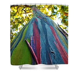 Shower Curtain featuring the photograph Rainbow Eucalyptus by Mitch Cat
