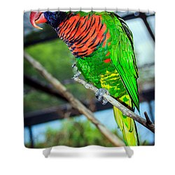 Shower Curtain featuring the photograph Rainbow Lory by Sennie Pierson