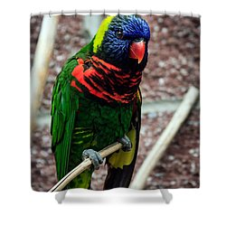 Shower Curtain featuring the photograph Rainbow Lory Too by Sennie Pierson