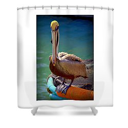 Rainbow Pelican Shower Curtain by Karen Wiles