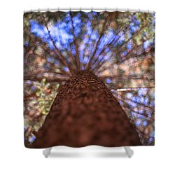 Rainbow Pine Shower Curtain by Aaron Aldrich