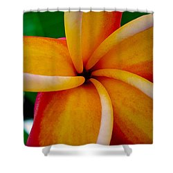 Shower Curtain featuring the photograph Rainbow Plumeria by TK Goforth