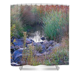 Rainbow Pond Shower Curtain by Bev Conover