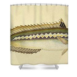 Rainbow Wrasse Shower Curtain by E Donovan and FC and J Rivington