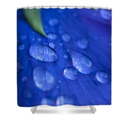 Raindrop Pansy Shower Curtain by Anne Gilbert