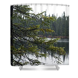 Raindrops On An Evergreen Shower Curtain by Larry Ricker