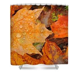 Raindrops On Fallen Maple Leaf Shower Curtain