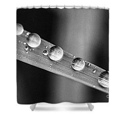 Raindrops On Grass Blade Shower Curtain by Elena Elisseeva