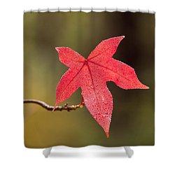 Raindrops On Red Fall Leaf Shower Curtain by Michelle Wrighton