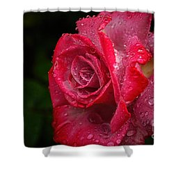 Raindrops On Roses Shower Curtain by Peggy Hughes