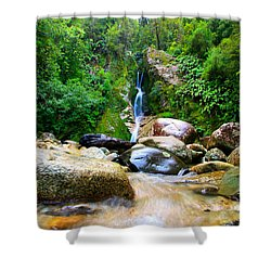 Shower Curtain featuring the photograph Rainforest Stream New Zealand by Amanda Stadther