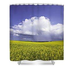 Rainstorm Over Canola Field Crop Shower Curtain by Ken Gillespie