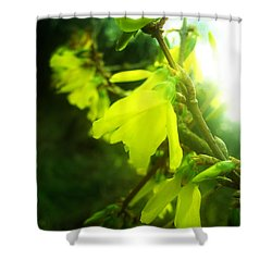 Shower Curtain featuring the photograph Rainy Dream by Nina Ficur Feenan