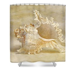 Ram's Murex Shower Curtain