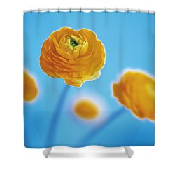 Ranunculus Shower Curtain by Lana Enderle