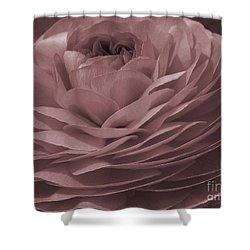 Shower Curtain featuring the photograph Ranunculus Red by Jean OKeeffe Macro Abundance Art