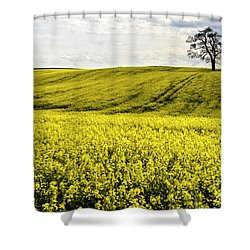 Rape Landscape With Lonely Tree Shower Curtain
