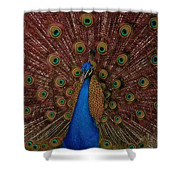 Rare Pink Tail Peacock Shower Curtain by Eti Reid