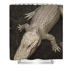 Rare White Alligator Shower Curtain