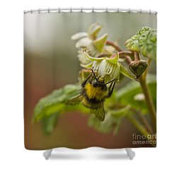 Shower Curtain featuring the photograph Raspberries And Honey by Liz  Alderdice