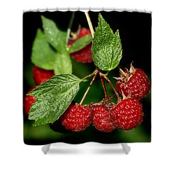 Raspberries Shower Curtain by Nikolyn McDonald
