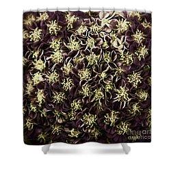 Shower Curtain featuring the photograph Raspberry Circles by Jean OKeeffe Macro Abundance Art