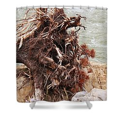 Shower Curtain featuring the photograph Ravaged Roots by Ann E Robson