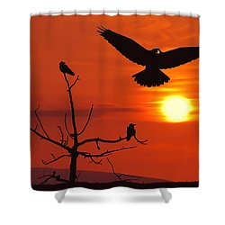 Raven Maniac Shower Curtain by Ron Day