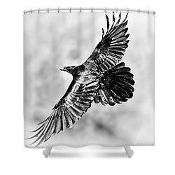 Raven Of Death Valley Shower Curtain