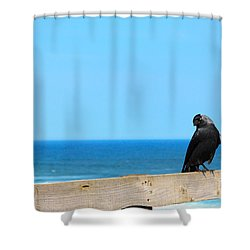 Shower Curtain featuring the photograph Raven Watching by Peta Thames