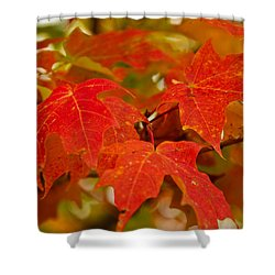 Ravishing Fall Shower Curtain