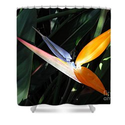 Shower Curtain featuring the photograph Ray Of Light by David Lawson