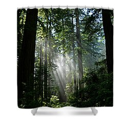 Rays In Redwoods Shower Curtain