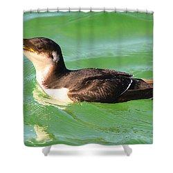 Razorbill In Florida Shower Curtain