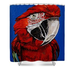 Razzy Red - Bird- Macaw Shower Curtain