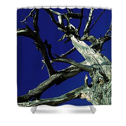 Shower Curtain featuring the photograph Reach For The Sky by Janice Westerberg