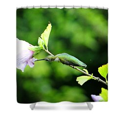 Reaching For Nectar Shower Curtain by Ecinja