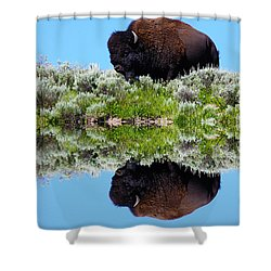 Ready For A Drink Shower Curtain by Shane Bechler